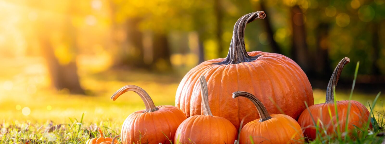 Advanced Wellness Announces Fall Foods to Incorporate
