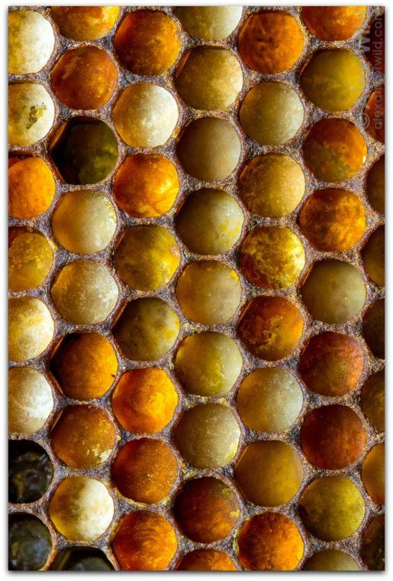 Honeycomb | Honey Home Remedies Health | Girlfriend is Better