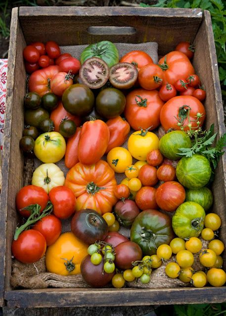 Tomato variety for Vegetable Beef Soup recipe   Girlfriend is Better