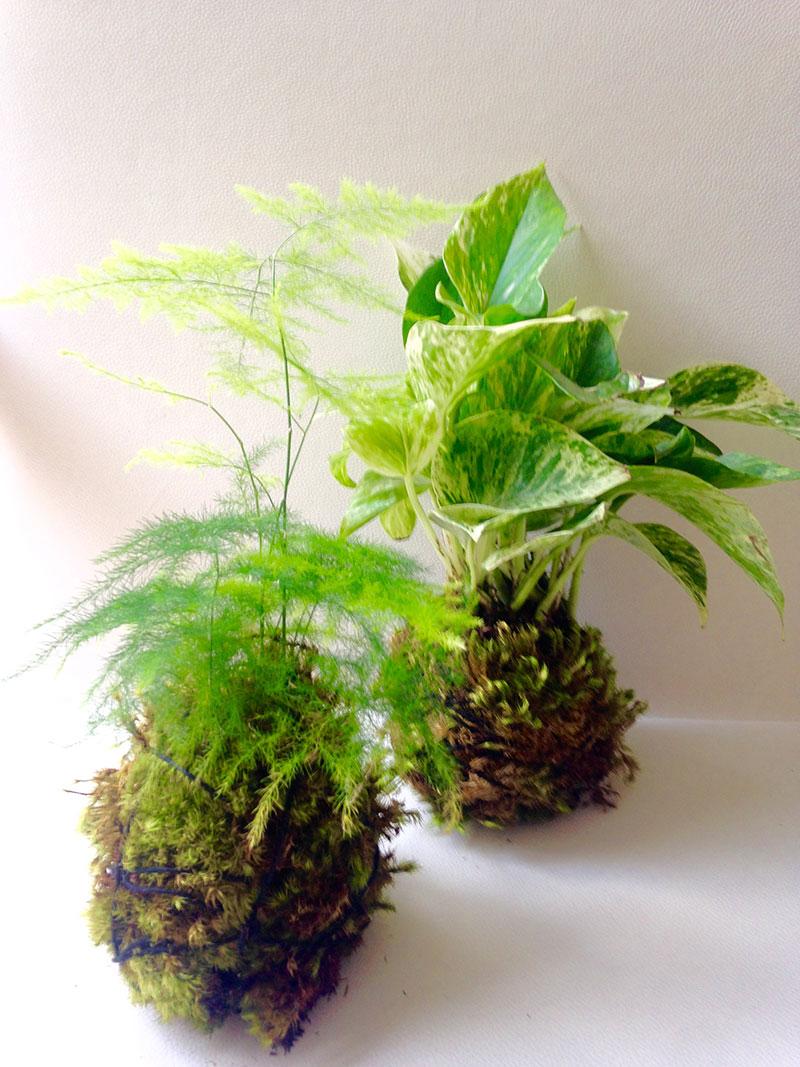 Kokedama moss pots by Bellafloradesign   Girlfriend is Better