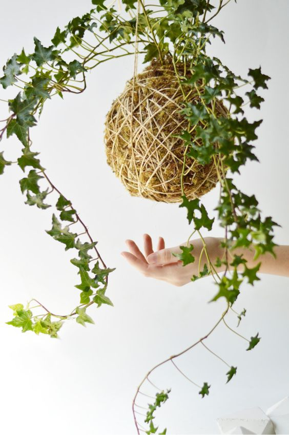 Kokedama hanging plant in moss   Girlfriend is Better
