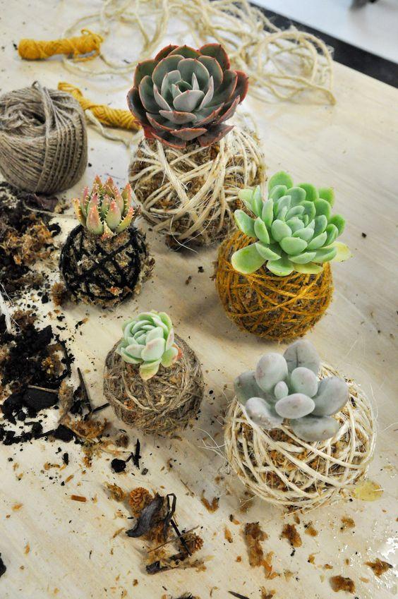 Kokedama succulent moss ball indoor garden DIY   Girlfriend is Better