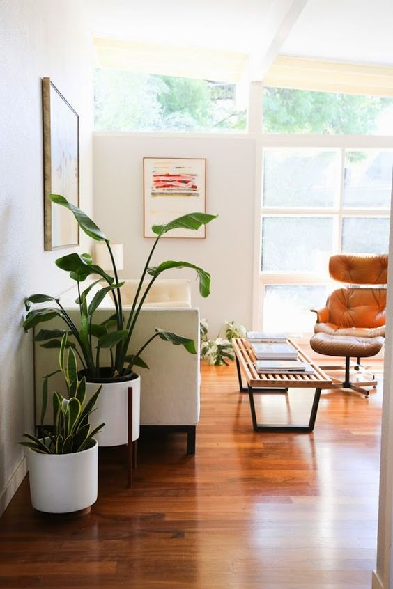 Use strong trees in the family center | Feng Shui decor | Girlfriend is Better