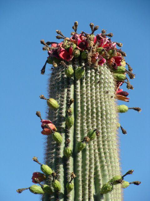 Scottsdale Arizona travel guide | Girlfriend is Better