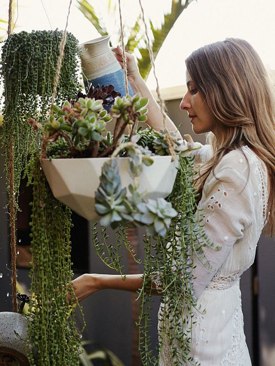 Best plants to use in your home   Feng Shui   Girlfriend is Better