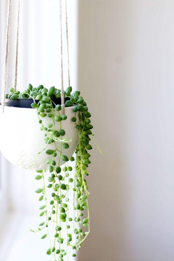 Hanging plants fix draining bathroom energy   Feng Shui