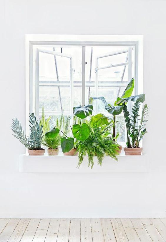 Vibrant healthy plants are best Feng Shui   Girlfriend is Better
