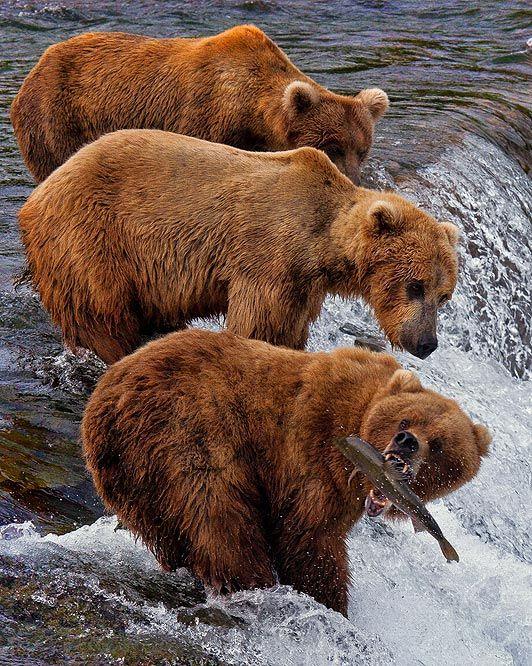Fishing guide for Alaska travel | Girlfriend is Better