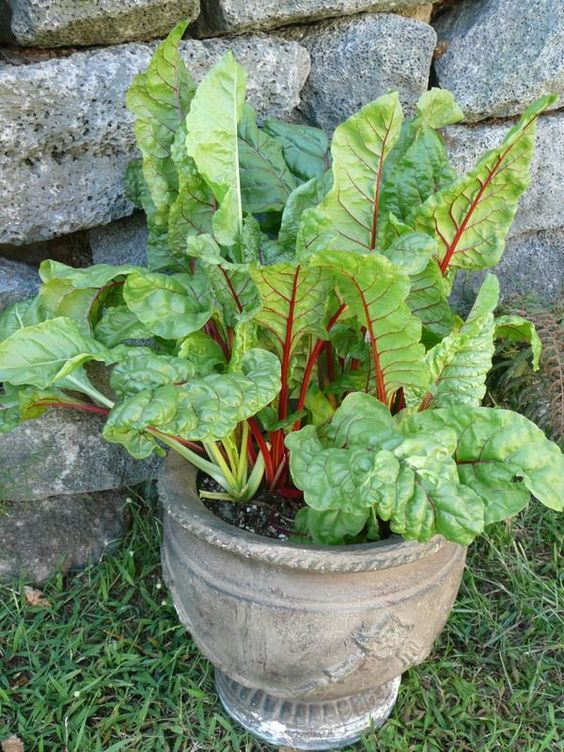 Swiss Chard | Green Smoothie recipe low glycemic | Girlfriend is Better