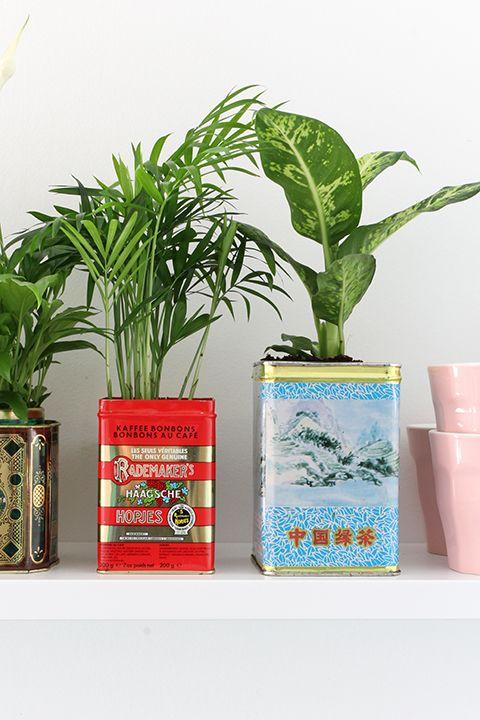 Aries astrology home decor guide | Bloempot DIY plants | Girlfriend is Better