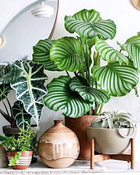 Earth element Feng Shui | Earthenware pots and indoor plants | Girlfriend is Better