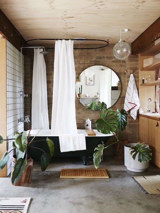 Monstera Deliciosa tropical house plants bathroom   Girlfriend is Better