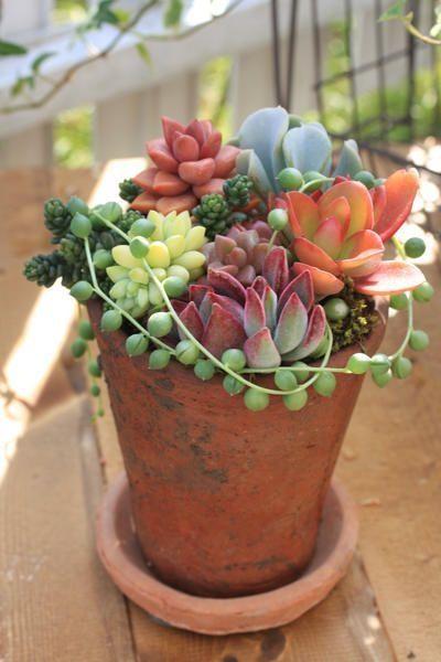 Sunner Hygge succulent plant terracotta pot patio | Girlfriend is Better