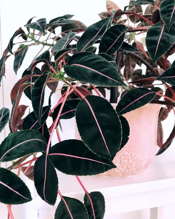 pink plants   Imptiens Velvetea vintage pottery   Girlfriend is Better