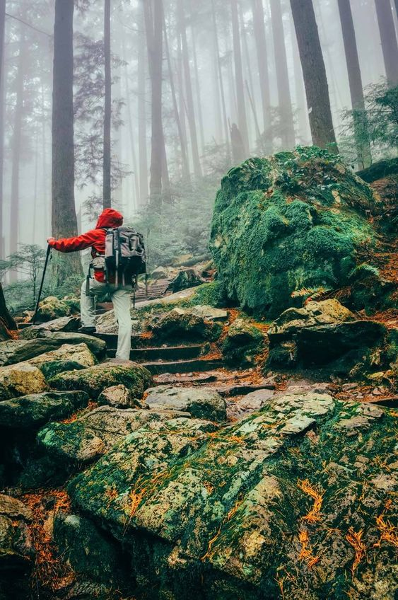 Vancouver BC   hikes ropes Grouse Mountain Ski Resort kid-friendly   Girlfriend is Better