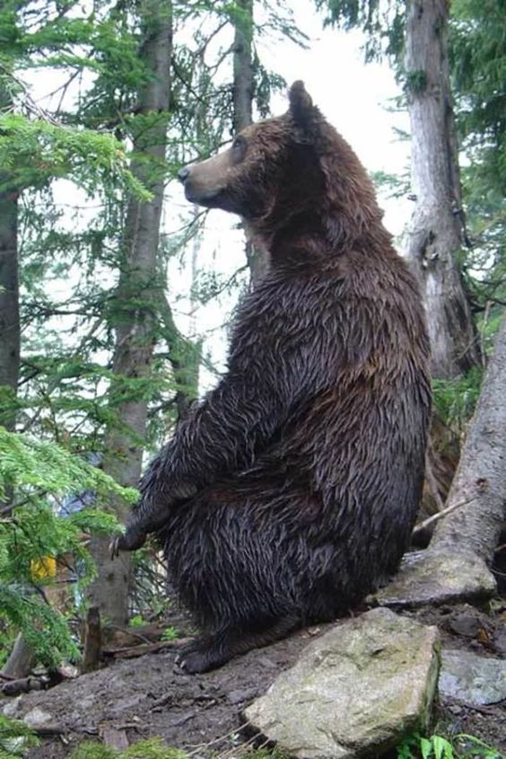 Vancouver BC   bear encounter travel guide tourist tips kid-friendly   Girlfriend is Better