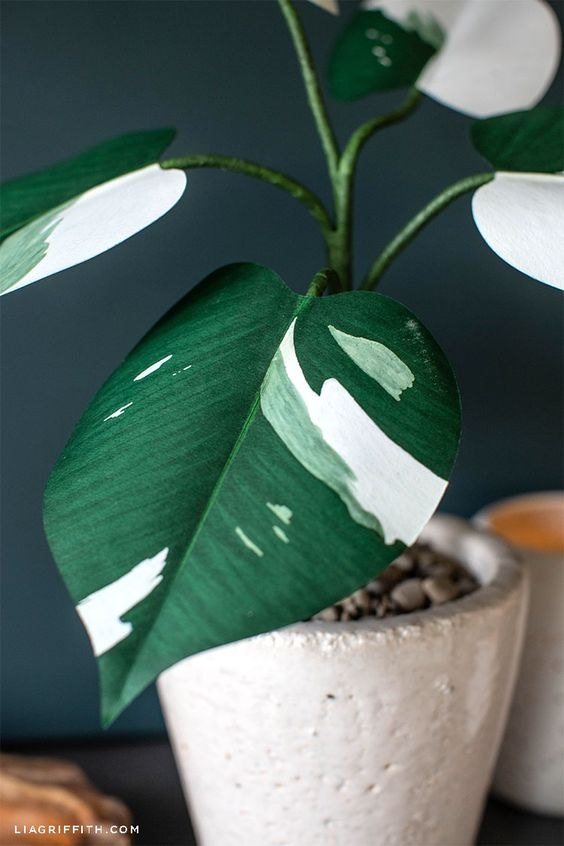patterned foliage   Paper White Knight Philodendron DIY plant craft   Girlfriend is Better