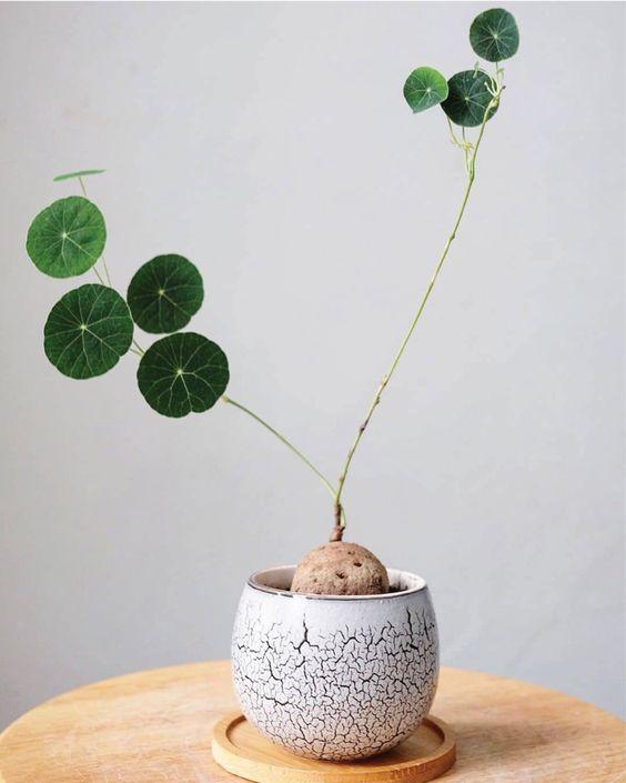 plant minimalism | stephania erecta houseplant | Girlfriend is Better