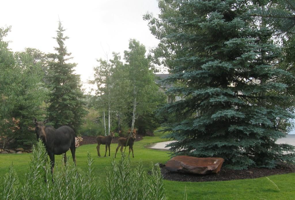 Moose Mana and Twins 2012 022