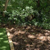 An image of a dog hiding in a bush