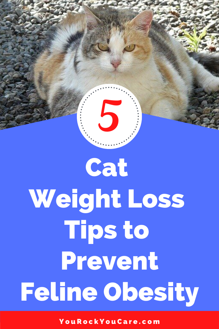 Overweight Cat? 5 Cat Weight Loss Tips to Prevent Feline Obesity