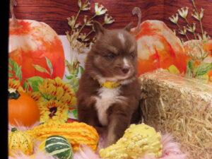Gold @ 5 weeks old