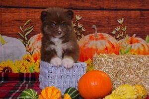 Topaz @ 6 weeks old
