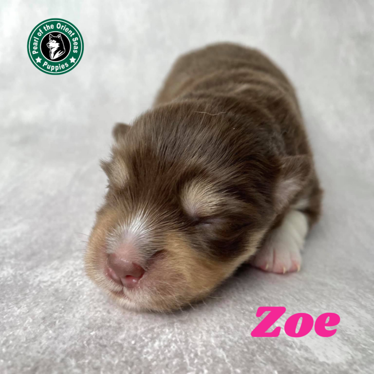 BROOKE x ZEE​ Litter