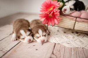 puppies-001