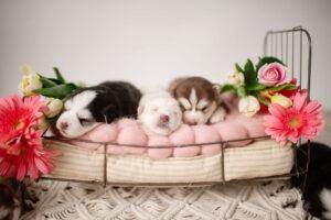 puppies-002