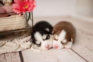 puppies-003