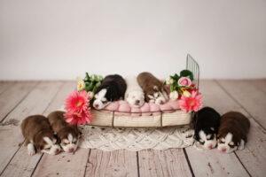 puppies-008