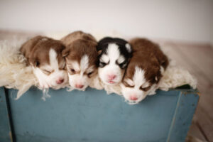 puppies-013
