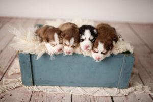 puppies-014