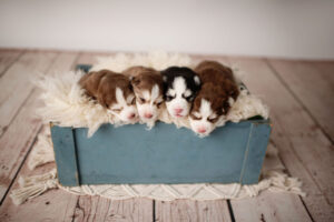 puppies-015