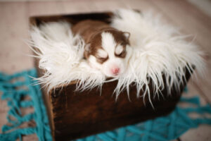 puppies-031