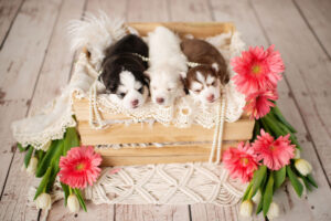 puppies-036