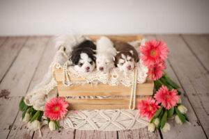 puppies-038