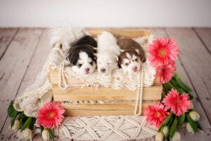 puppies-041