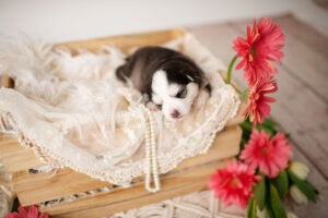 puppies-047