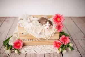 puppies-048
