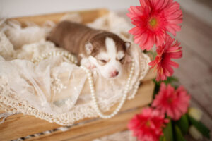 puppies-049