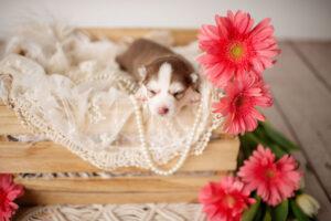 puppies-051