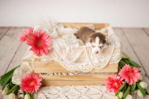 puppies-052