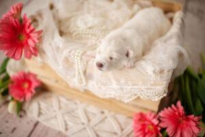 puppies-053