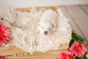 puppies-054