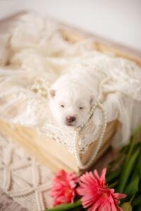 puppies-055