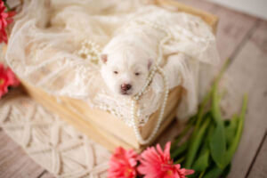 puppies-056