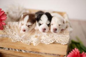 puppies-059