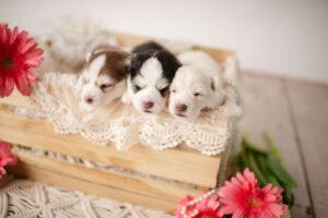 puppies-060